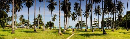 椰子热带海岛的掌上型计算机 库存图片