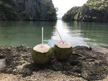 椰子爱 免版税图库摄影