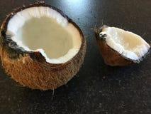 椰子的椰树 库存照片