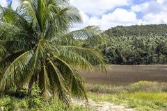 椰子种植园 库存图片