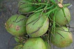 椰子绿色新鲜从开始 免版税库存图片