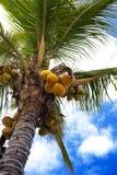 椰子绿色 库存图片