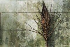 椰子群 免版税图库摄影
