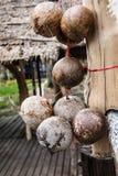 椰子脱水了 免版税库存照片