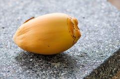 椰子落 免版税库存照片