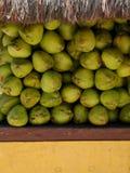 椰子销售额 免版税库存图片