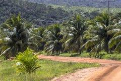 椰子领域 免版税库存照片