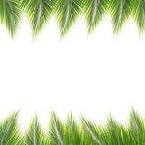 椰子离开框架 免版税库存照片