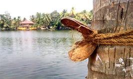 椰子须根 免版税库存图片