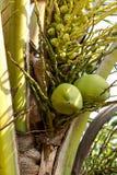 椰子绿色结构树 库存图片