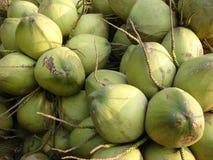 椰子 库存图片