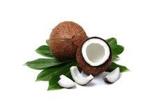 椰子 免版税库存图片