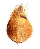 椰子 库存照片