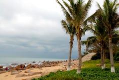椰树危险海运 免版税库存照片