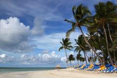 椰树岩礁海滩 免版税库存图片