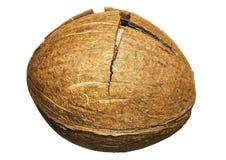 椰树崩裂了 免版税库存照片