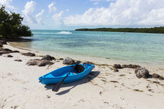椰树李子海滩,佛罗里达 免版税库存照片