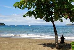 椰树海滩 免版税库存照片