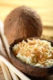 椰树螺母米 免版税库存图片