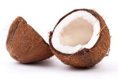 椰树 免版税库存照片