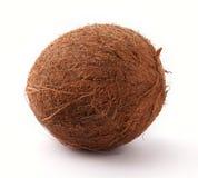 椰树 库存照片