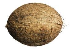 椰树 图库摄影