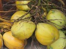 椰树 库存图片