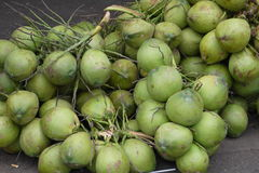 椰树 免版税图库摄影