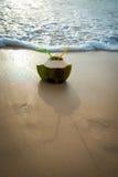 椰树 免版税库存图片