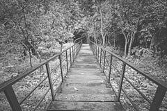 楼下在秋天秋天褐色树叶子backg的自然森林里 库存图片