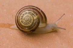 楼层蜗牛 免版税库存图片