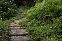 楼梯到在孤立小河瀑布附近的密林里-萨比,南非 图库摄影