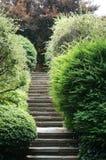 楼梯和灌木在敦巴顿橡树园橡木 免版税库存照片