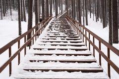 楼梯在冬天森林里 库存图片