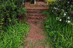 楼梯在有草和白花的庭院里用旁边方式 库存图片