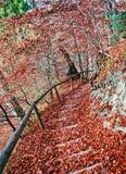 楼梯撒布与红色叶子 库存照片