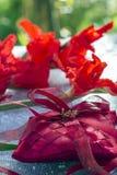 概念亲吻妇女的爱人 圆环照片在垫的有花的 免版税库存照片
