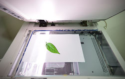 概念保存结构树 免版税图库摄影