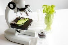概念健康食品检验草本在实验室 库存图片