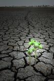 概念干燥地球希望种子 免版税库存照片