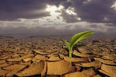 概念干燥地面寿命新的上升的新芽 免版税库存照片