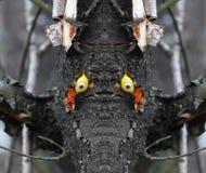 概念性照片-森林的面孔-从木头的面孔与玩偶` s注视 免版税库存照片