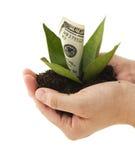 概念性财务增长图象查出的白色 免版税库存照片