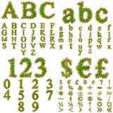 概念性绿草和花字体 免版税库存图片