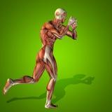概念性3D人的人健康解剖学 库存图片