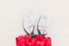 概念愉快的复活节 兔宝宝耳朵和时髦的桃红色郁金香在丝毫 免版税库存图片