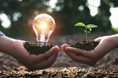 概念清洁能源本质上 拿着电灯泡和小树的手 库存图片