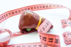 概念照片扩大的肝脏或胆囊 在测量的磁带旁边的解剖肝脏形象 形象化扩大器官和胆汁 库存图片