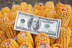 概念玉米 免版税库存图片