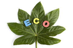 概念生态 免版税图库摄影